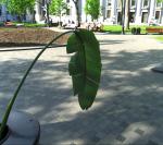la plante en ville 6, mai 2013